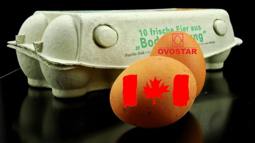 Що поєднує Ovostar і Канадське посольство у господарському спорі двох українських підприємств